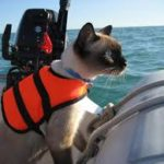 Cat in lifejacket